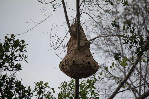bea nest