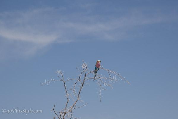 Birdspotting in Etosha Park Namibia | 40plusstyle.com