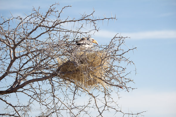 A bird in its nest | 40plusstyle.com