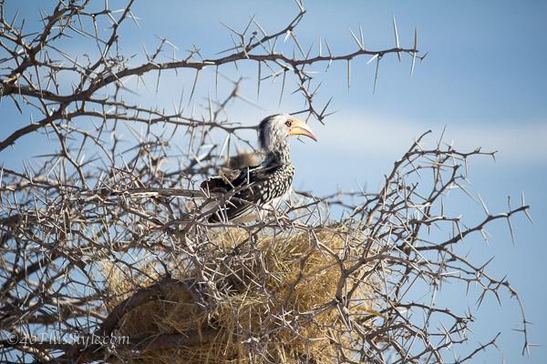 A special bird in Etosha Park Namibia | 40plusstyle.com