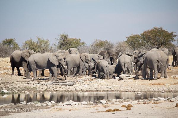 Elephants in Etosha Park Namibia | 40plusstyle.com