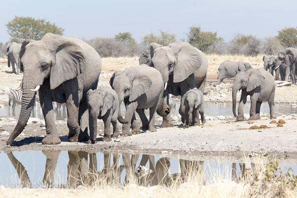 Elephants at the waterhole | 40plusstyle.com