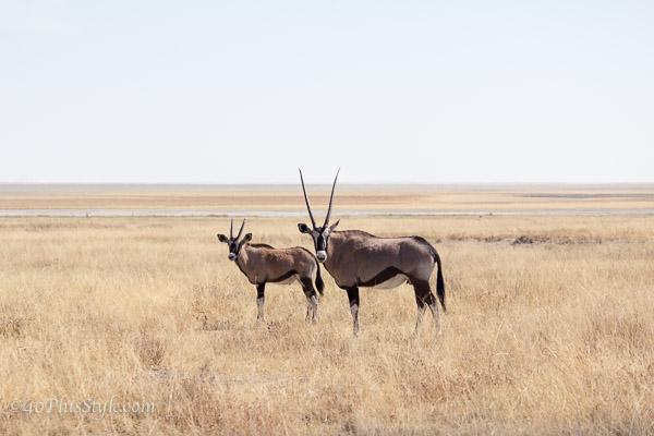 Admiring the animals in Etosha Park Namibia | 40plusstyle.com