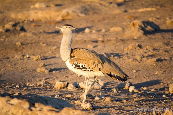 bird in Etosha Park Namibia, Africa | 40plusstyle.com