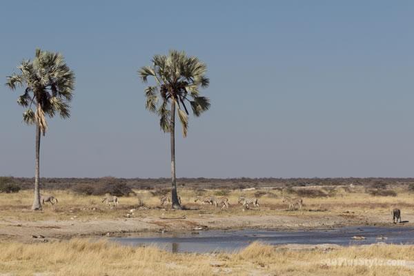 Two Palms waterhole in Etosha Park Namibia, Africa | 40plusstyle.com