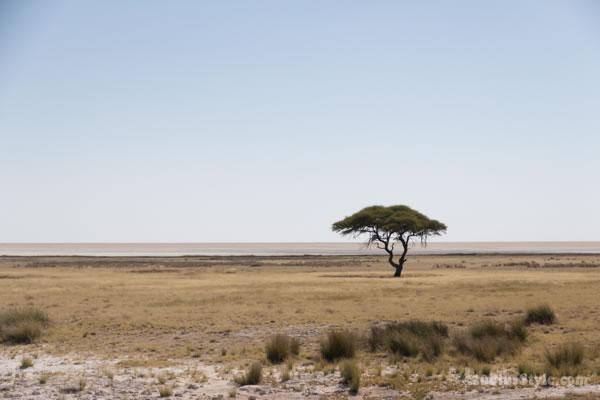 Etosha Park Namibia, Africa | 40plusstyle.com