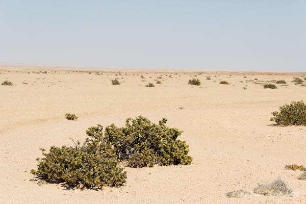 Namib desert Namibia, Africa | 40plusstyle.com