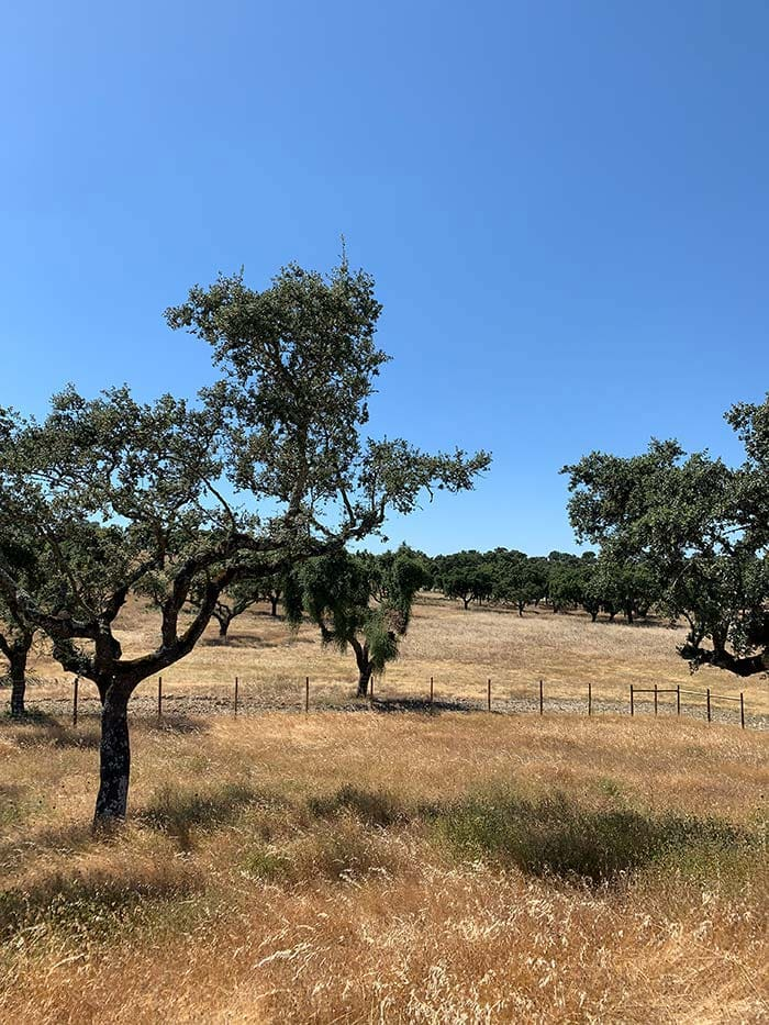 Cork trees in Portugal | 40plusstyle.com